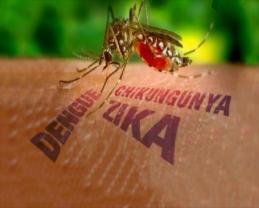 Dengue, Chikunguya y Zica